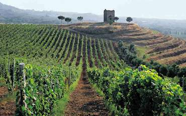 Frascati Countryside Vineyard