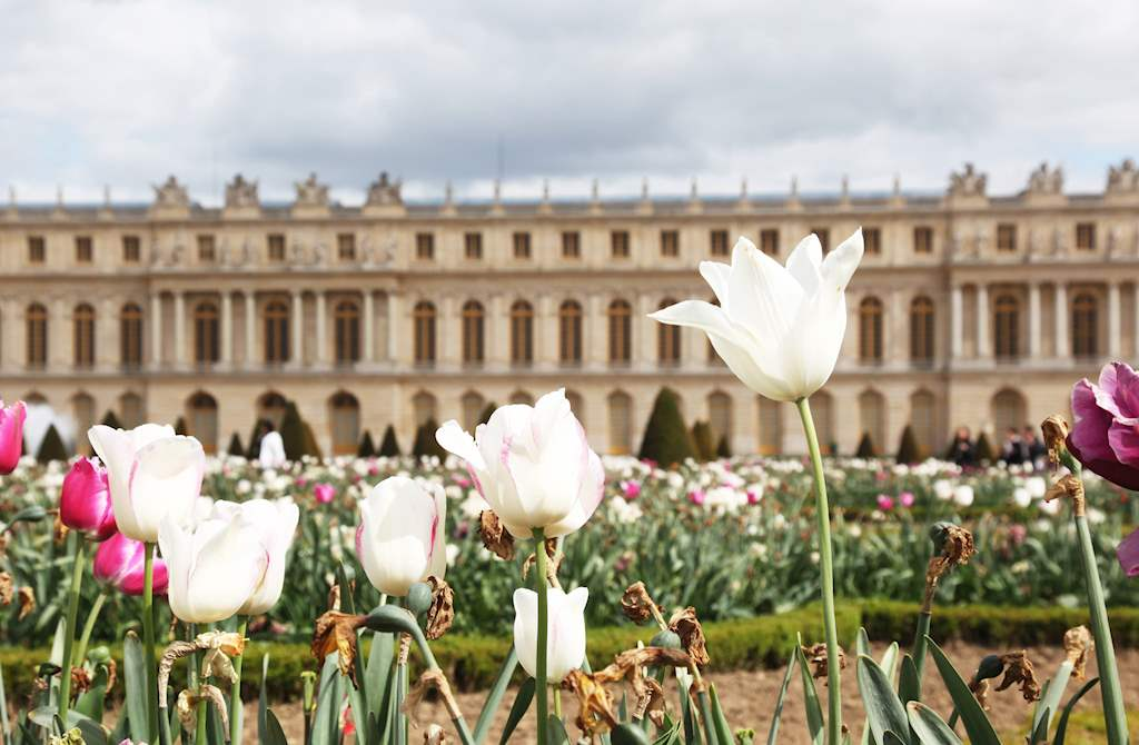 Versailles view with tulipan