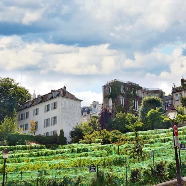 Vineyard clos Montmartre