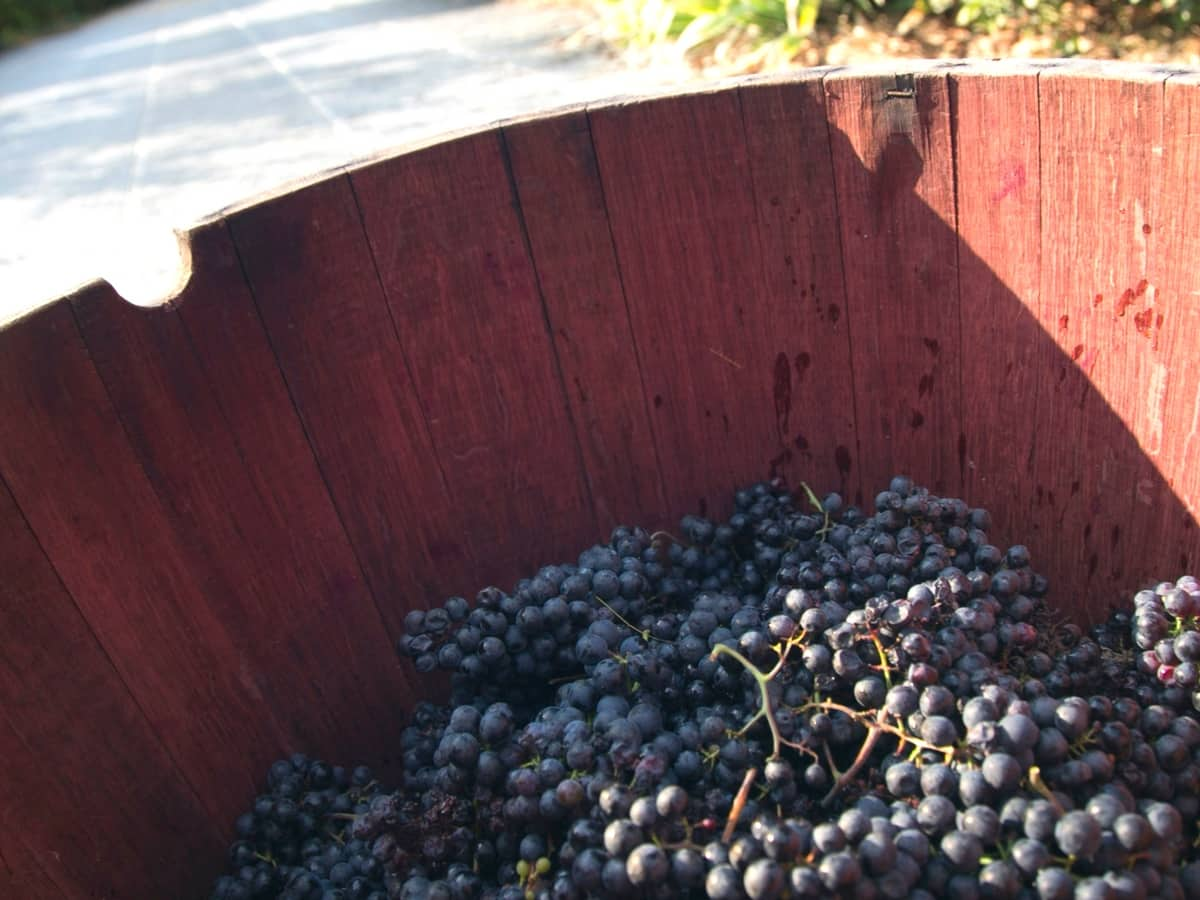 The Grape Escape Wine Tour From Florence