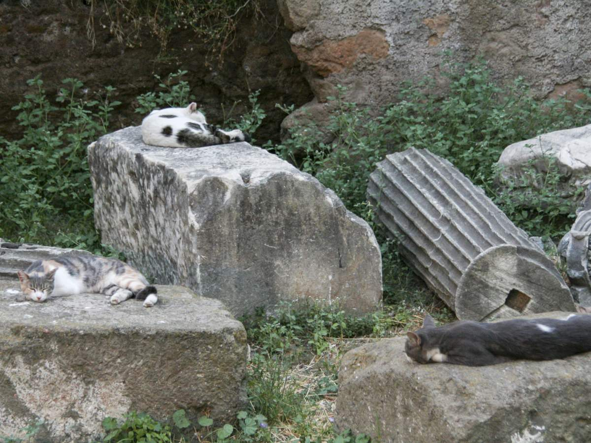 Cats sleeping on ancient ruins in Rome